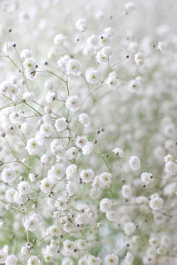 Fleurs mariage juif   Gypsophiles